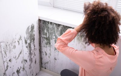 If you have large piles of stuff at home, there's a big chance you could also have black mold. Here's what you can do about it.